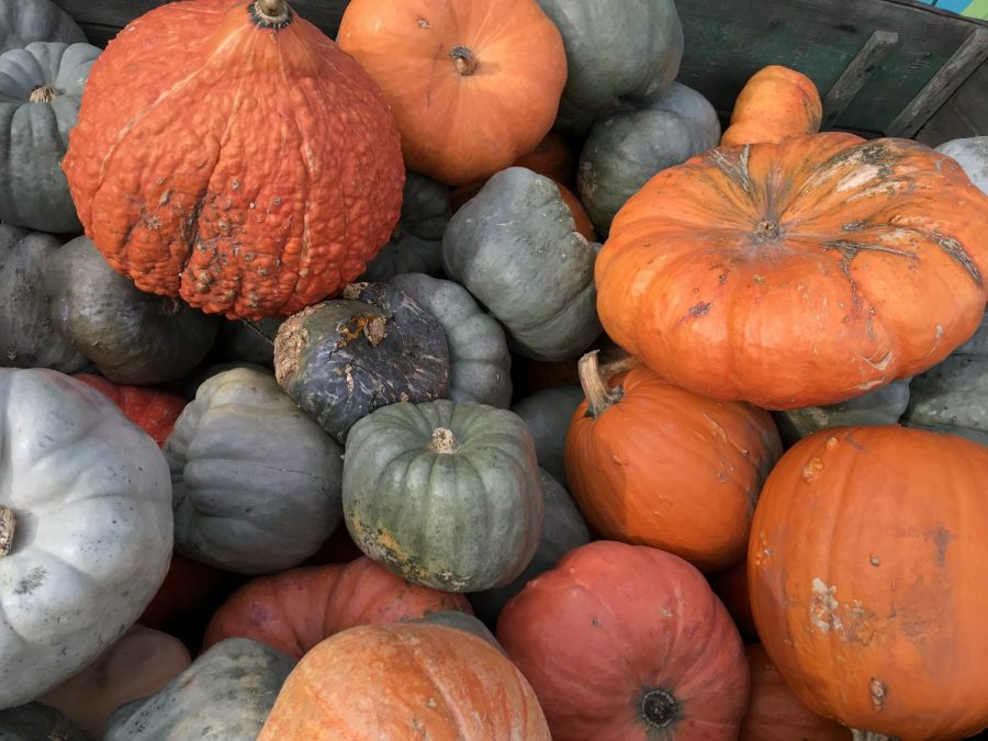 Pumpkins+and+gourds